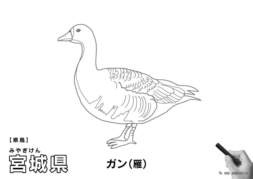 県鳥 宮城県 ガン(雁)のイラスト・ぬりえ