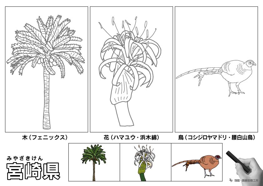 宮崎県 県木 県花 県鳥 のイラスト・ぬりえ