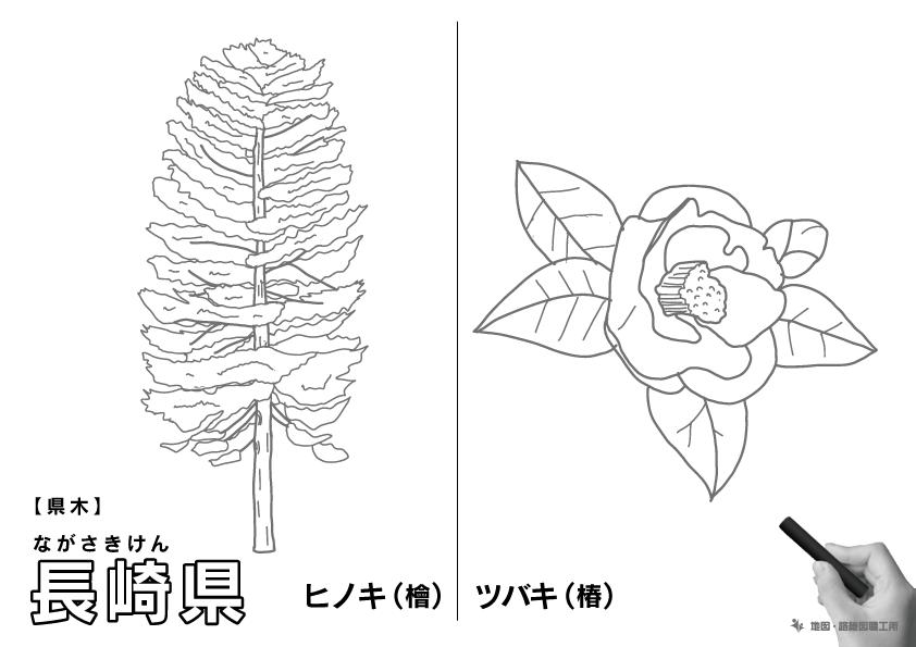 県木 長崎県 ヒノキ(檜)・ツバキ(椿)のイラスト・ぬりえ