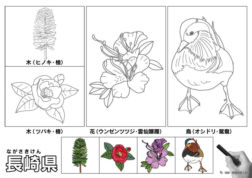 長崎県 県木 県花 県鳥 のイラスト・ぬりえ