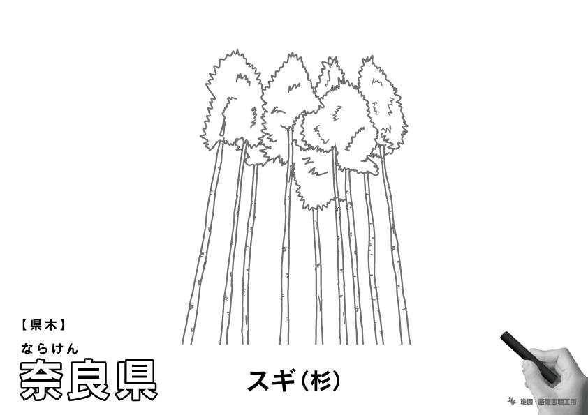 県木 奈良県 スギ(杉)のイラスト・ぬりえ