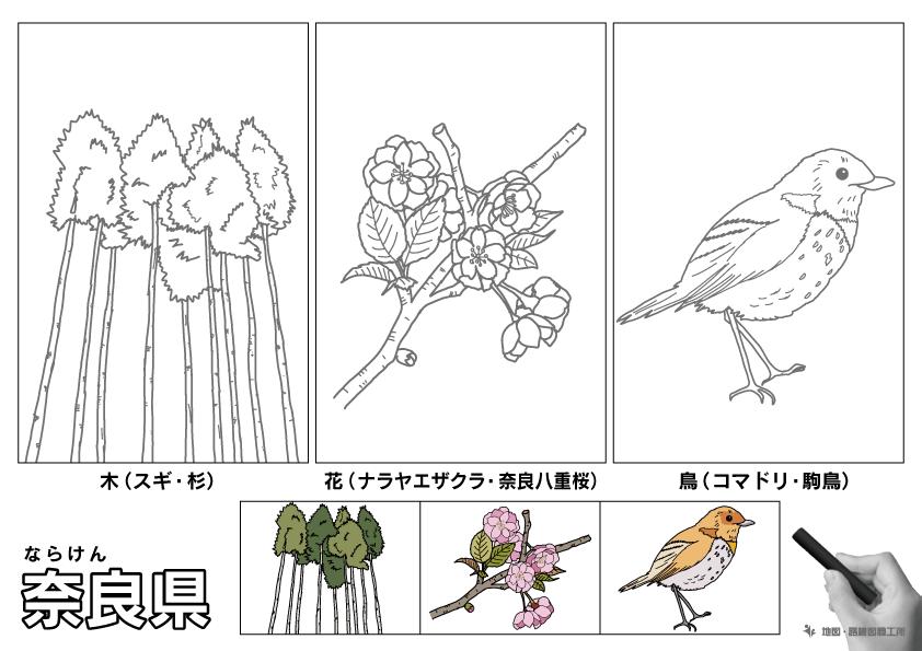 奈良県 県木 県花 県鳥 のイラスト・ぬりえ