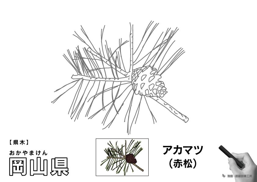 県木 岡山県 アカマツ(赤松)のイラスト・ぬりえ