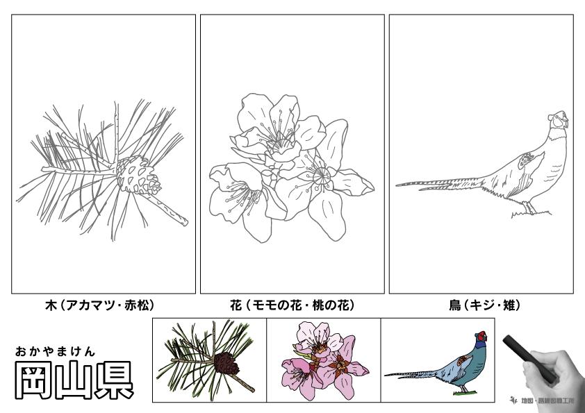 岡山県 県木 県花 県鳥 のイラスト・ぬりえ