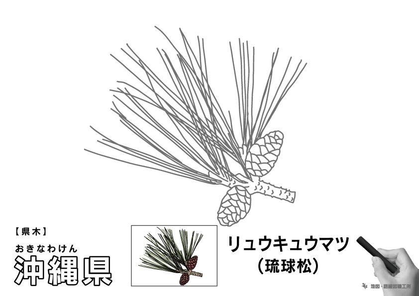 県木 沖縄県 リュウキュウマツ(琉球松)のイラスト・ぬりえ