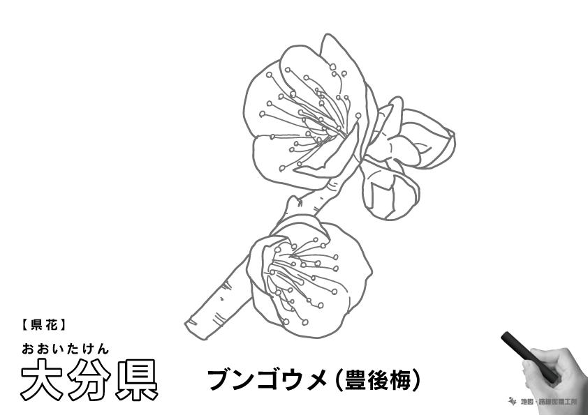 県花 大分県 ブンゴウメ(豊後梅)のイラスト・ぬりえ