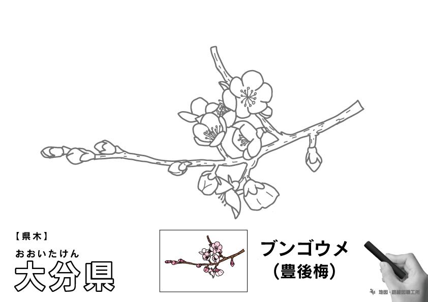 県木 大分県 ブンゴウメ(豊後梅)のイラスト・ぬりえ