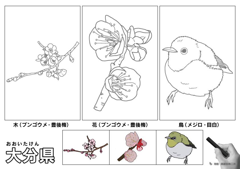 大分県 県木 県花 県鳥 のイラスト・ぬりえ
