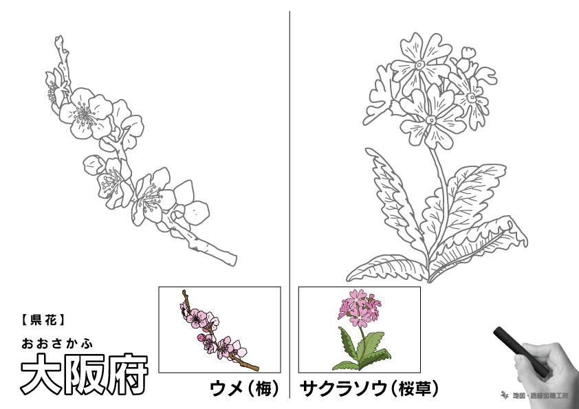 県花 大阪府 ウメ(梅)・サクラソウ(桜草)のイラスト・ぬりえ