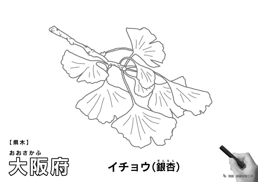 県木 大阪府 イチョウ(銀杏)のイラスト・ぬりえ