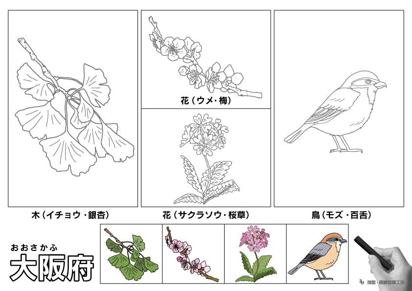 大阪府 県木 県花 県鳥 のイラスト・ぬりえ