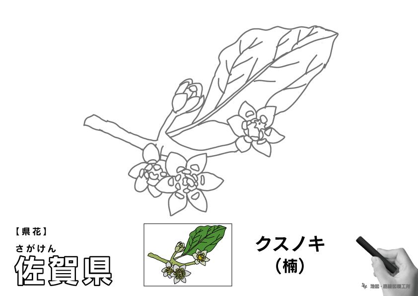 県花 佐賀県 クスノキ(楠)のイラスト・ぬりえ