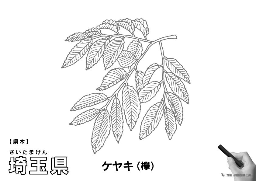 県木 埼玉県 ケヤキ(欅)のイラスト・ぬりえ