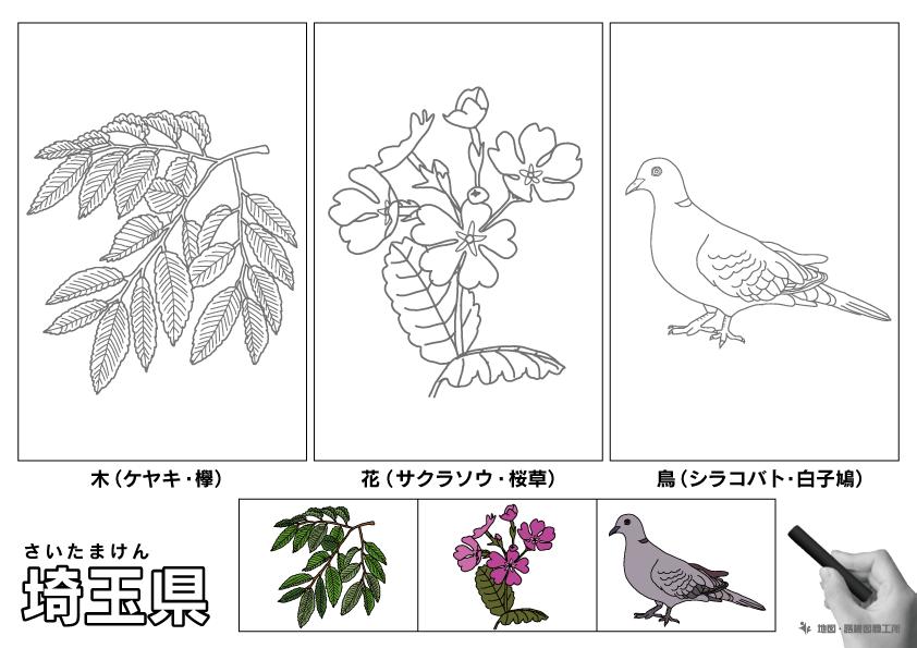 埼玉県 県木 県花 県鳥 のイラスト・ぬりえ