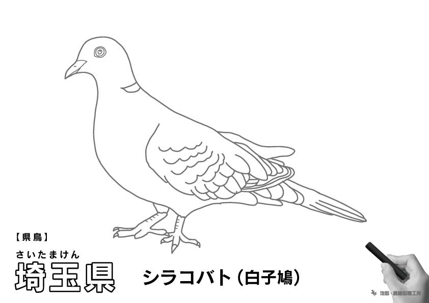 県鳥 埼玉県 シラコバト(白子鳩)のイラスト・ぬりえ
