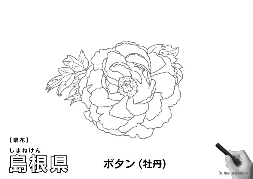 県花 島根県 ボタン(牡丹)のイラスト・ぬりえ