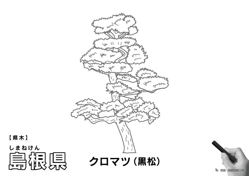 県木 島根県 クロマツ(黒松)のイラスト・ぬりえ