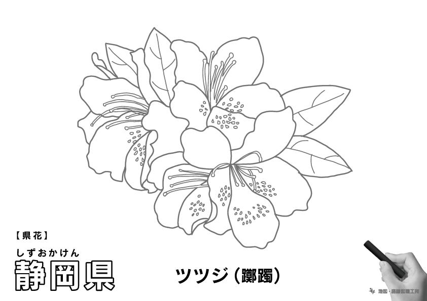県花 静岡県 ツツジ(躑躅)のイラスト・ぬりえ