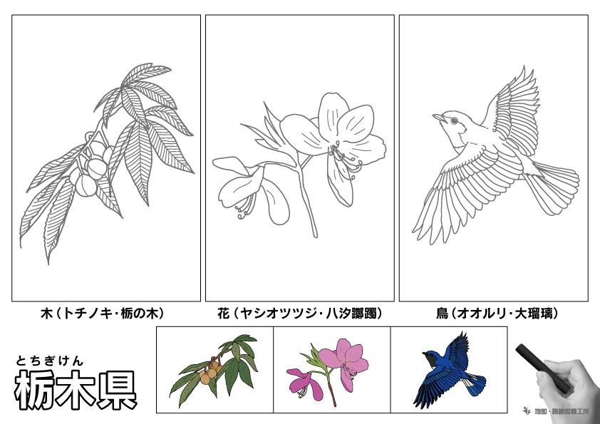 栃木県 県木 県花 県鳥 のイラスト・ぬりえ