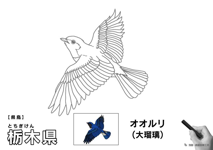 県鳥 栃木県 オオルリ(大瑠璃)のイラスト・ぬりえ