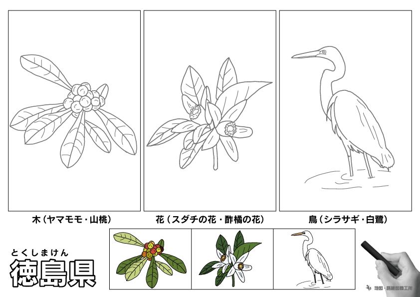 徳島県 県木 県花 県鳥 のイラスト・ぬりえ