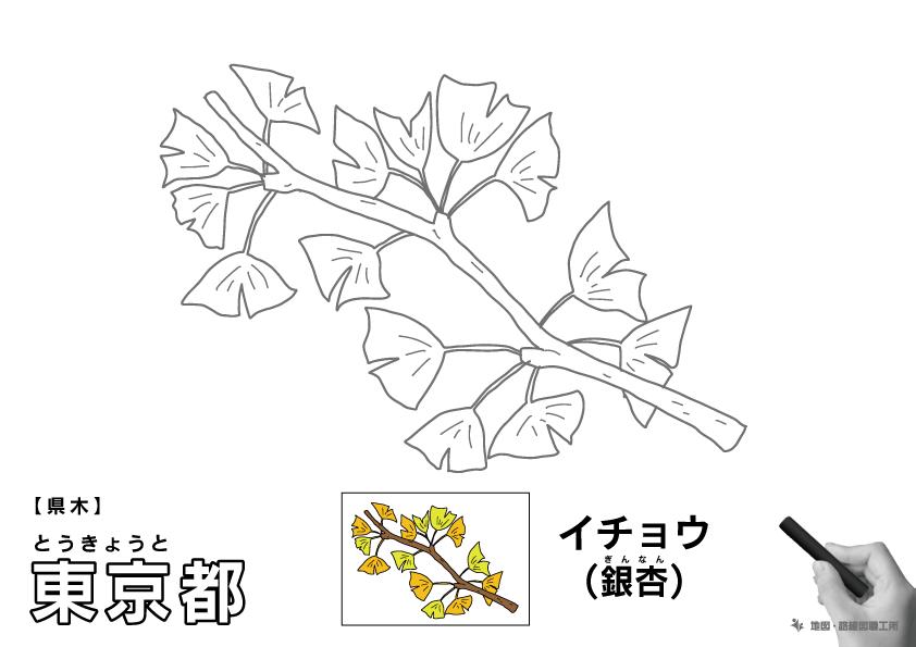 県木 東京都 イチョウ(銀杏)のイラスト・ぬりえ