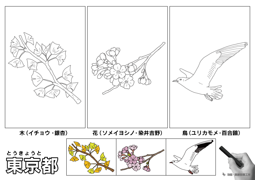 東京都 県木 県花 県鳥 のイラスト・ぬりえ