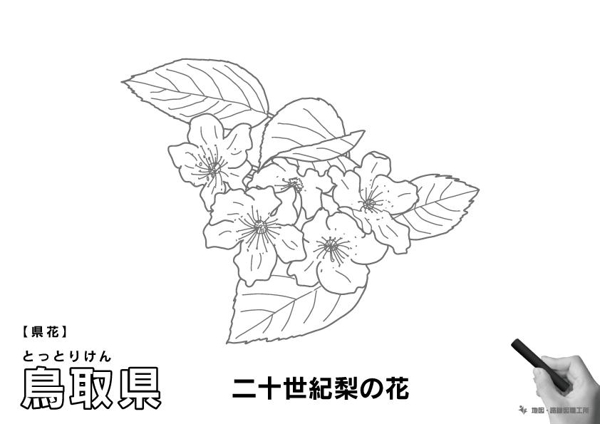 県花 鳥取県 二十世紀梨の花のイラスト・ぬりえ
