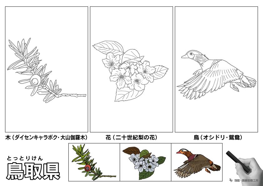鳥取県 県木 県花 県鳥 のイラスト・ぬりえ