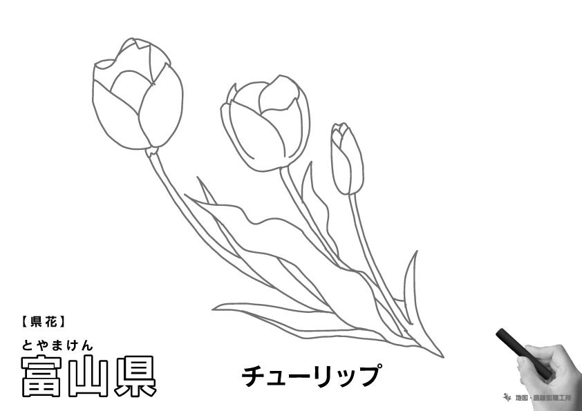 県花 富山県 チューリップのイラスト・ぬりえ