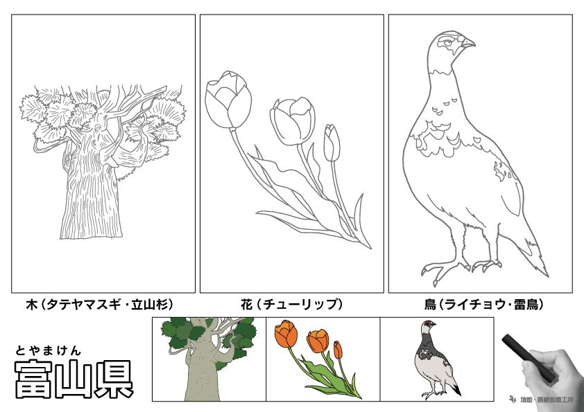 富山県 県木 県花 県鳥 のイラスト・ぬりえ