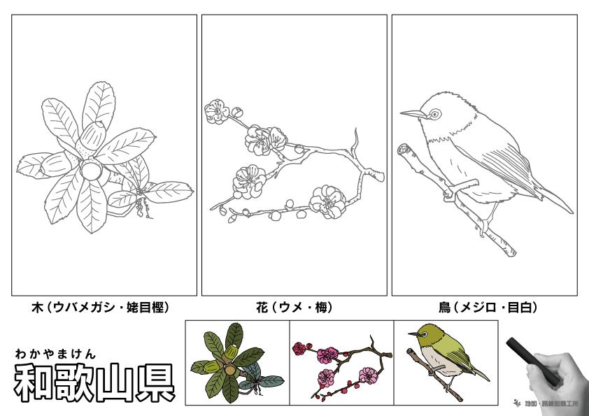 和歌山県 県木 県花 県鳥 のイラスト・ぬりえ