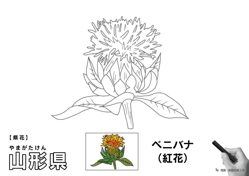 県花 山形県 ベニバナ(紅花)のイラスト・ぬりえ