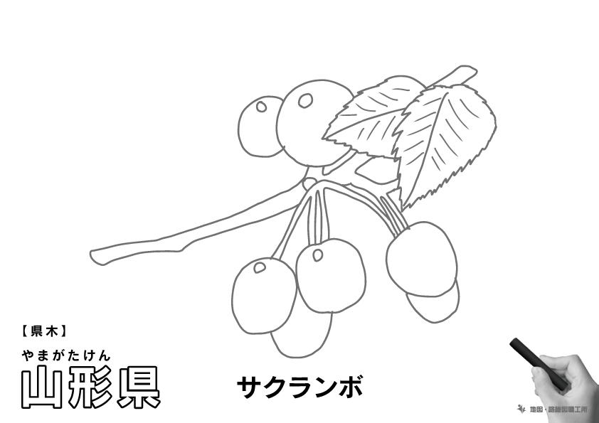 県木 山形県 サクランボのイラスト・ぬりえ