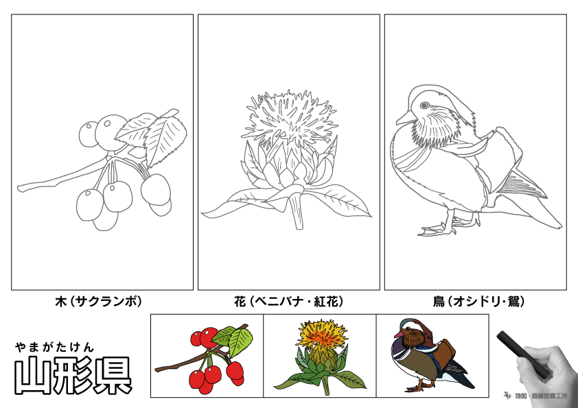 山形県 県木 県花 県鳥 のイラスト・ぬりえ