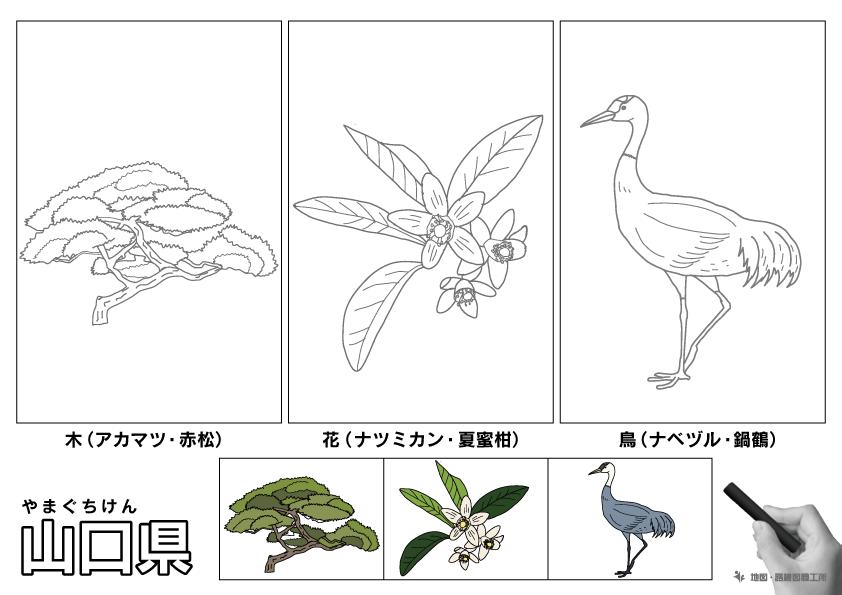 山口県 県木 県花 県鳥 のイラスト・ぬりえ