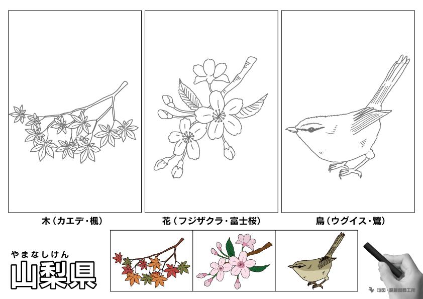 山梨県 県木 県花 県鳥 のイラスト・ぬりえ